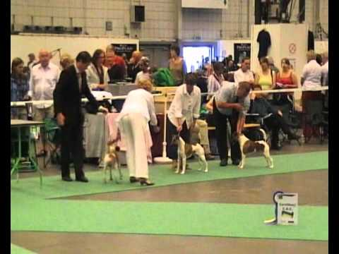 Dog World 2008 World Dog Show And Specialty