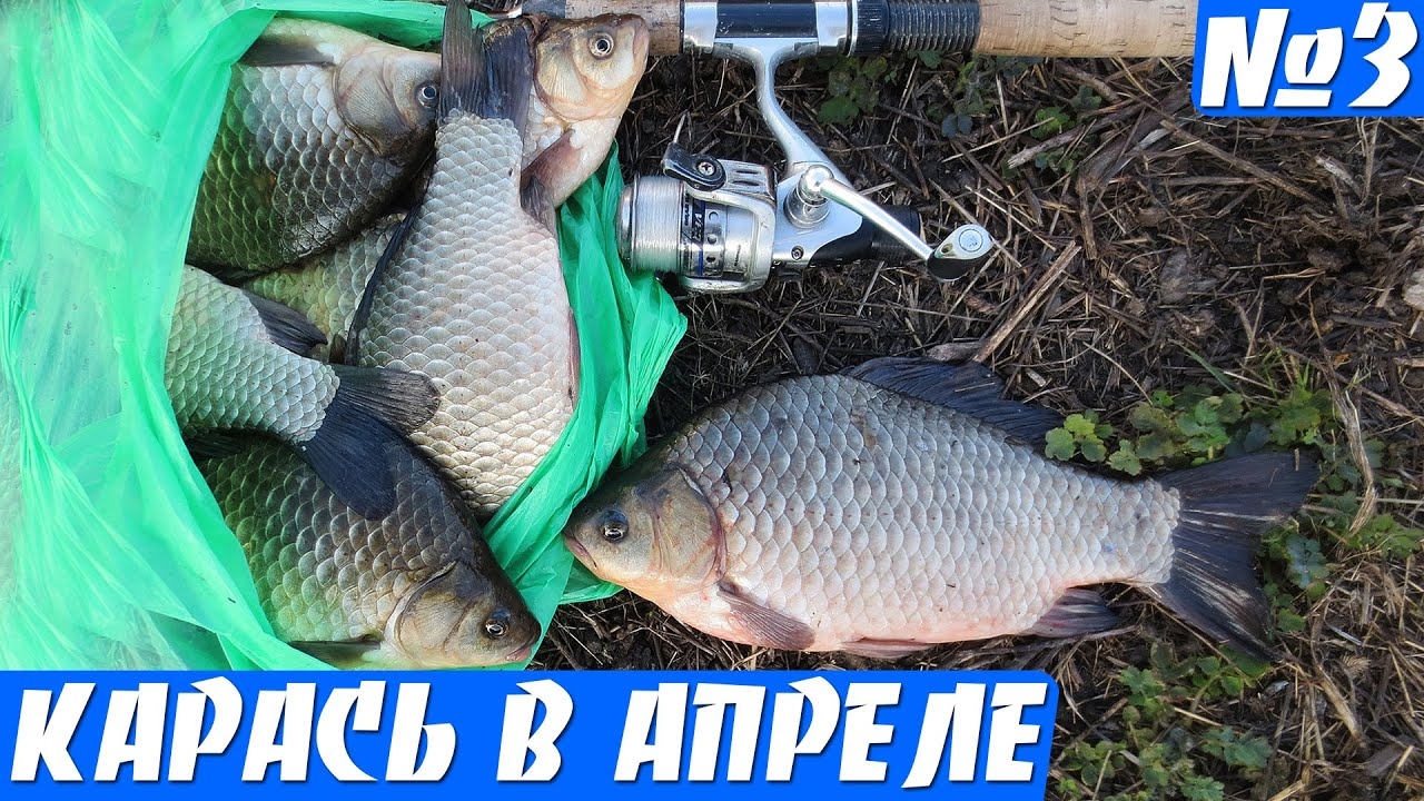 ютуб видео рыбалка крупного карася