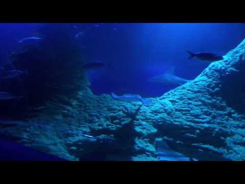 Experience AQWA's Shipwreck Coast Tunnel