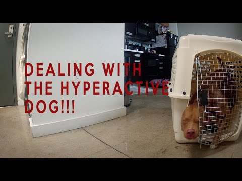 DEALING WITH THE HYPERACTIVE DOG....