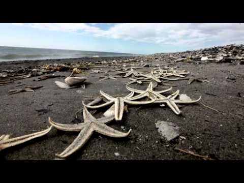 BP Oil Disaster 1 Yr Anniversary Retrospective - Oil Spill's Early Effect on Wildlife
