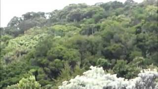 Mandalawangi Pangrango - Ari Malibu