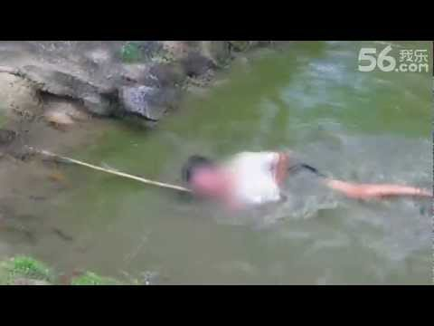 A guy seen here trying to catch an electric eel by trapping the creature in the corner of this pond first then use a stick to pick it out of the water. But I...