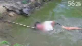 This is NOT How You Catch an Electric Eel (Electrophorus electricus)