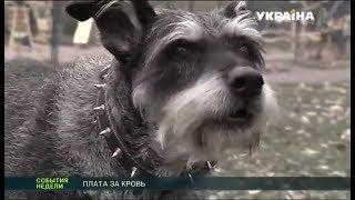 В Днепропетровской области домашние собаки загрызли женщину