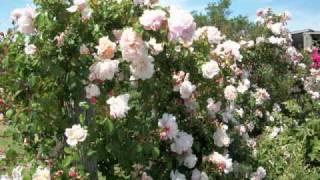 Jardin en Uruguay   Categoría: VIVEROS
