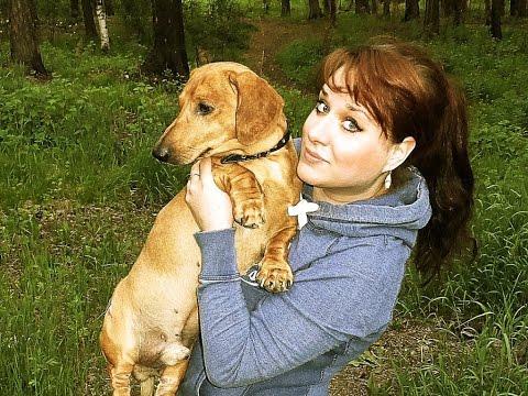 GVK : Моя собака, такса, смешная такса, такса кушает, такса кушает горох, хозяин и собака