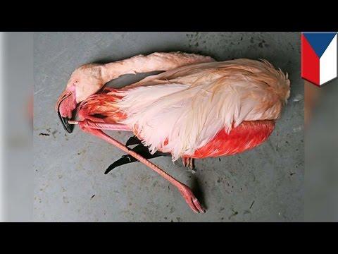 Sekelompok anak kecil membunuh flaminggo di kebun binatang Ceko - Tomonews