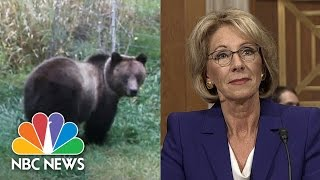 Superintendent Debunks Betsy DeVos On Guns To Protect Against Grizzlies | NBC News