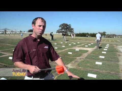 AgriLife Extension turfgrass trials