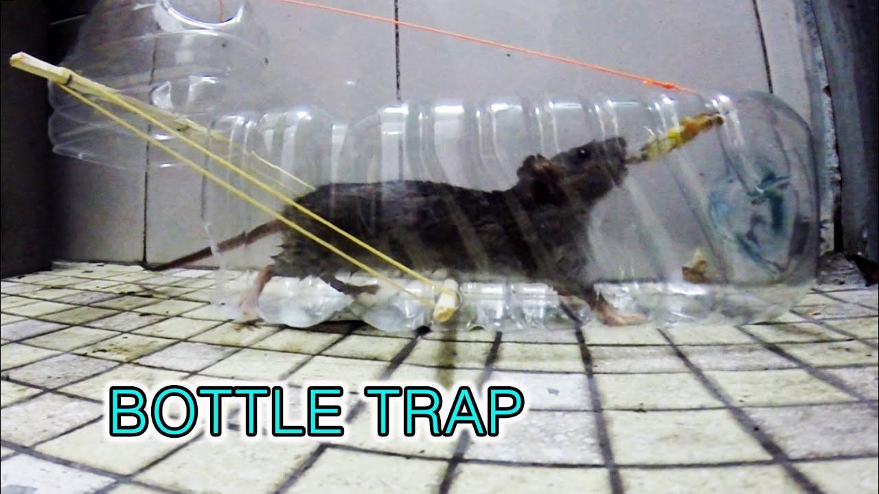 Как поймать крысу, сделать крысоловку своими руками из бутылки