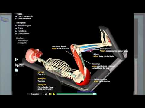 Leg Press Anatomy Image 1