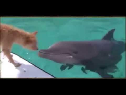 un-dauphin-sauve-un-chien-des-mchoires-dun-requin.html