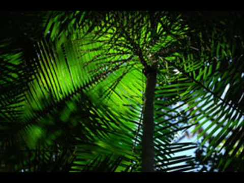 Giorgio Giordano - Amazzonia (David Tort Remix) Music Videos