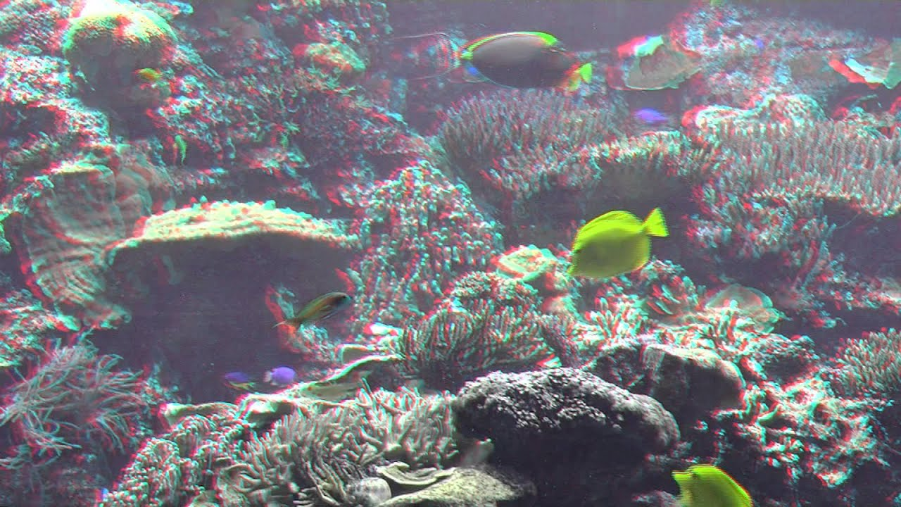 Amazing Underwater World Relaxing 3d Video In Hd Requires Red And Blue Glasses Youtube