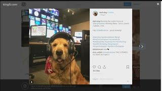 Dash the viral dog visits KING 5