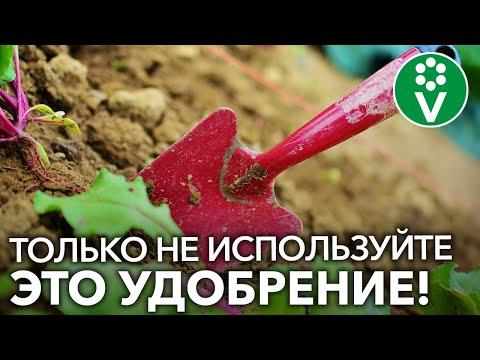 Удобрения осенью – какие как правильно и когда вносить