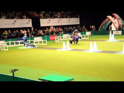 Flyball Final, Crufts 2011