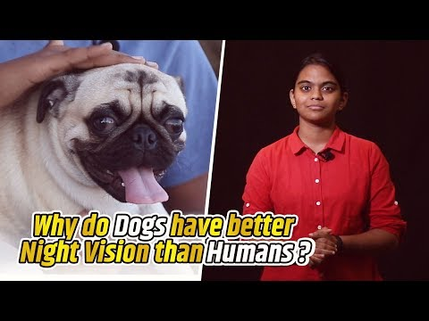 Why do dogs have better night vision than humans? | Life Science #05 | BIGBANG