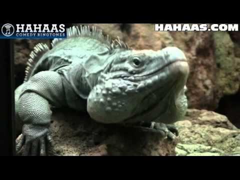 Hahaas Comedy Ringtones 16 - Country Hillbilly Ringtones video
