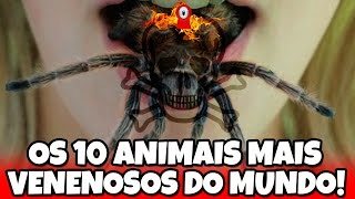 OS 10 ANIMAIS MAIS VENENOSOS DO MUNDO