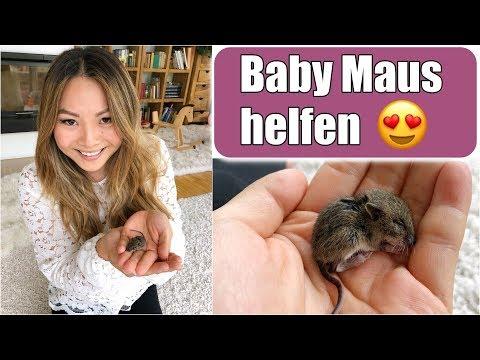 Eine Baby Maus in unserem Haus