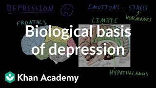 Biological basis of depression | Behavior | MCAT | Khan Academy