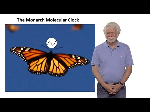 Steven Reppert (UMass) Part 2: Monarch Butterfly Migration: A Time-Compensated Sun Compass