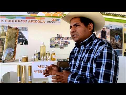 Miel Virgen se produce en Apispona de Benito Juárez de Villaflores