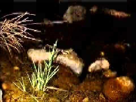 Reprodução dos anfíbios