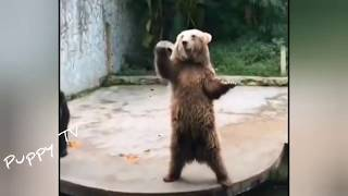 Kungfu Dog😂Funny And Cute Puppies Compilation