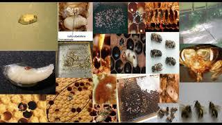 Bienenvolk / Bienenvölker gestorben wie geht es weiter?