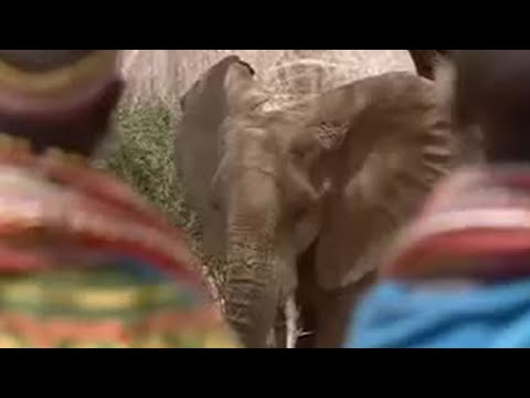Tribal ritual apology to endangered elephants - BBC wildlife