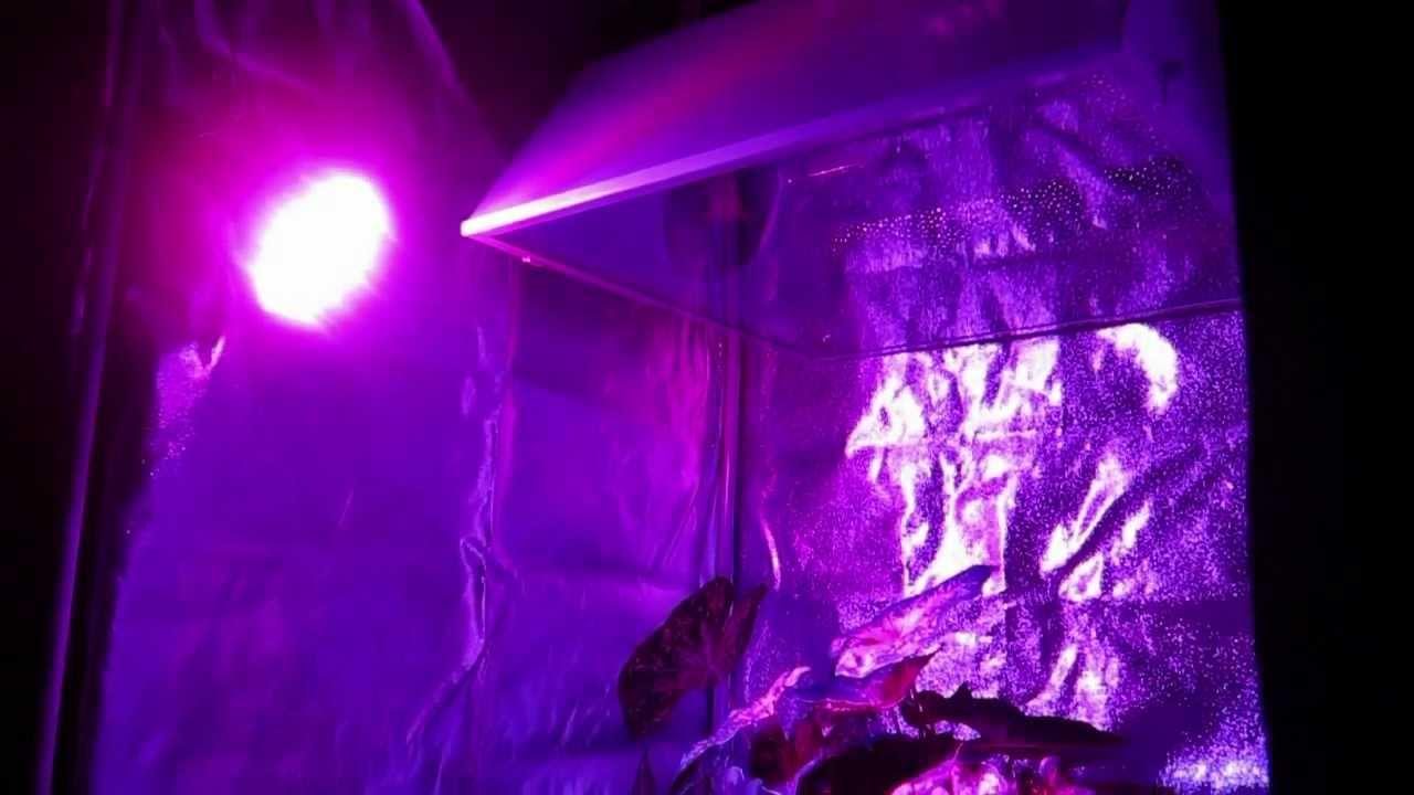 13w advance spectrum led grow light bulbs. Black Bedroom Furniture Sets. Home Design Ideas