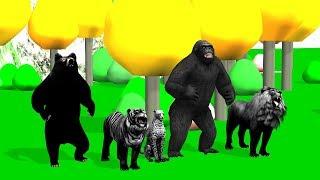 Black Animals Finger Family song For Kids   Gorilla,nursery rhymes,tiger,cheetha,arcus n media Kidz