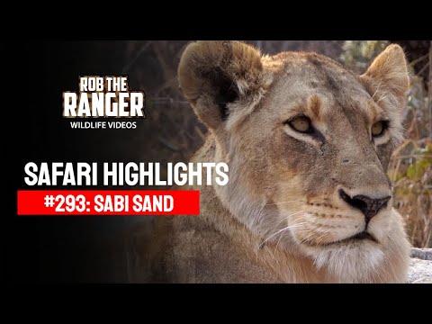 Idube Safari Highlights #293: 18 - 21 September 2014 (latest Sightings) video