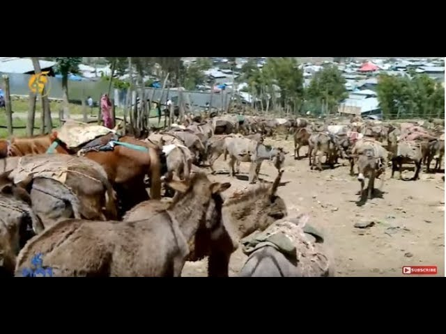 Donkey Parking In Debre Berhan
