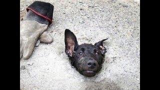 """Đầu chú chó nằm trên đường khiến mọi người hiếu kì, tiến gần cảnh tượng quá xót xa """"Ai đã làm"""""""