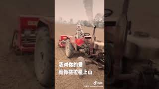 抖音  沙雕 动物 教育 2  chinese tiktok  funny animals education2