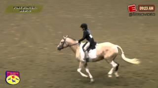 Big E Hunt Seat Horse Show '15 - Pony Hunter Lg-Med  - Jemma Puddle Duck