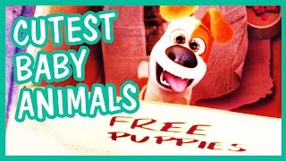 Cutest Baby Animals from Animated Family Movies