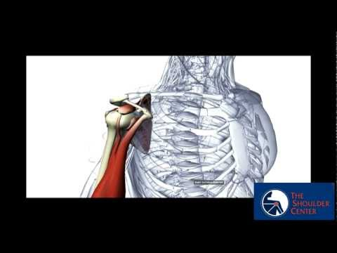 Shoulder Surgery Research Update