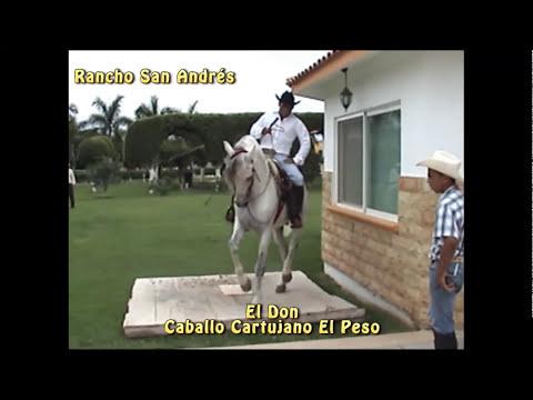 Caballos Bailadores Rancho San Andres - El Peso