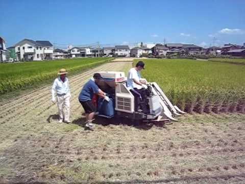 Rice Harvesting in Japan