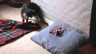 Cat Attacks Octopus Toy