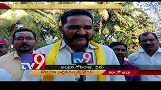 Virus threat to Konaseema coconut trees