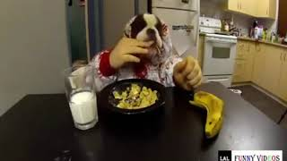 Funny Animals & Pets | Funny Animals Clean Funny Animals Kids | HD