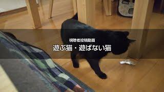 遊ぶ猫・遊ばない猫 猫動画