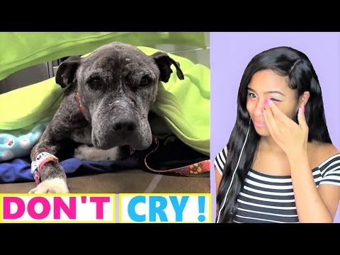 Try Not To Cry: A Sick, Pit Bull Abandoned on a bridge and left to die - DENNIS   Reaction