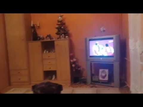 Reakcja Kibica Na Mecz Polska - Qatar Piłka Ręczna !